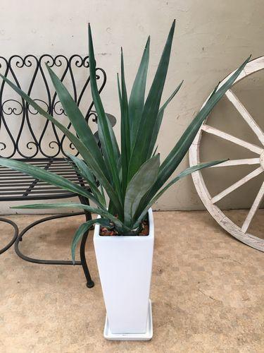 アガベテキーラ H100cm程 陶器鉢 受皿付 現品 送料無料 大型 観葉植物 インテリア 新築祝い 開店祝い 開業祝い 引っ越し祝い ギフト お祝い