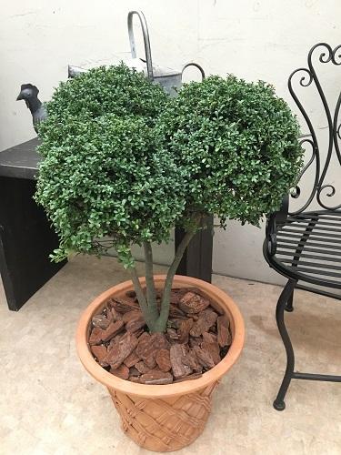 ツゲトピアリー 現品 88cm 観葉植物 送料無料 大型 インテリア オシャレ トピアリー仕立て
