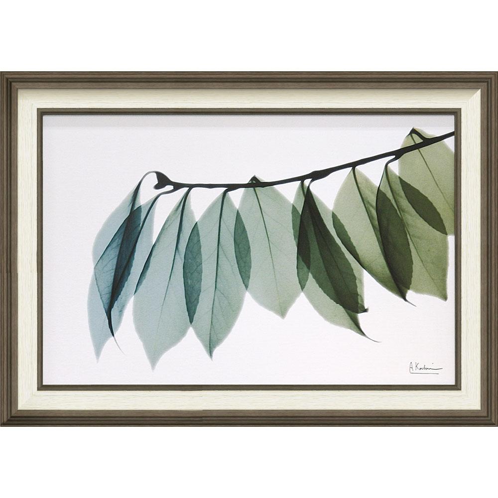 壁掛け飾り 絵画 おしゃれ かわいい | X RAY キャンバスアート 「リーフ2(Mサイズ)」 | 絵画額 XR-12006 | 絵画 |