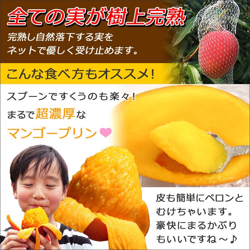 【シーズンオフ】[訳あり宮崎マンゴー約4kg 12~18玉入り]お試し品宮崎県産完熟アップルマンゴー 訳あり マンゴー ちょいわるマンゴー 業務用 加工用