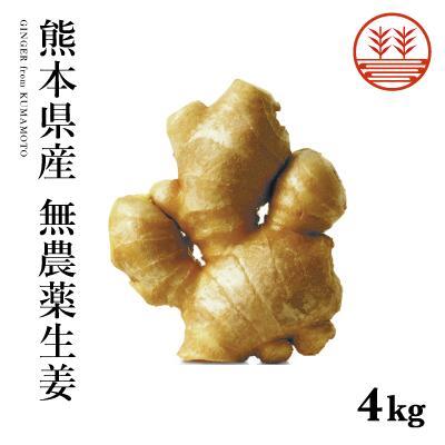 無農薬だから安心安全 無農薬 生姜 4kg 熊本県産 国産 生姜 しょうが ショウガ 根生姜 佃煮 薬味 きざみ 生姜 生姜焼き 唐揚げ