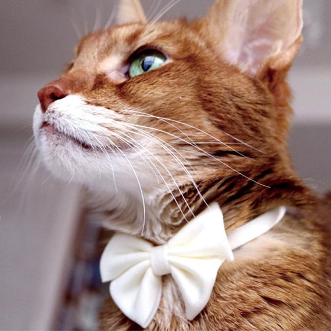 おしゃれで安全仕様 neconoのパステルカラーのリボン首輪 2点までメール便可 necono ネコノ 猫の首輪 Luce Ribbon 価格 リボン パステル メッセージカード対応 ルーチェ Pastel 春の新作