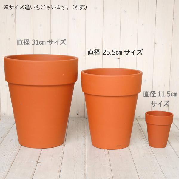 gmart Rakuten Global Market Terracotta pottery pot tall pot