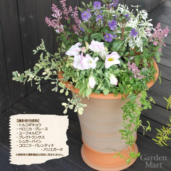 Camden Arne 30cm in diameter size WF-534 [witch Ford terra cotta /  flowerpot]