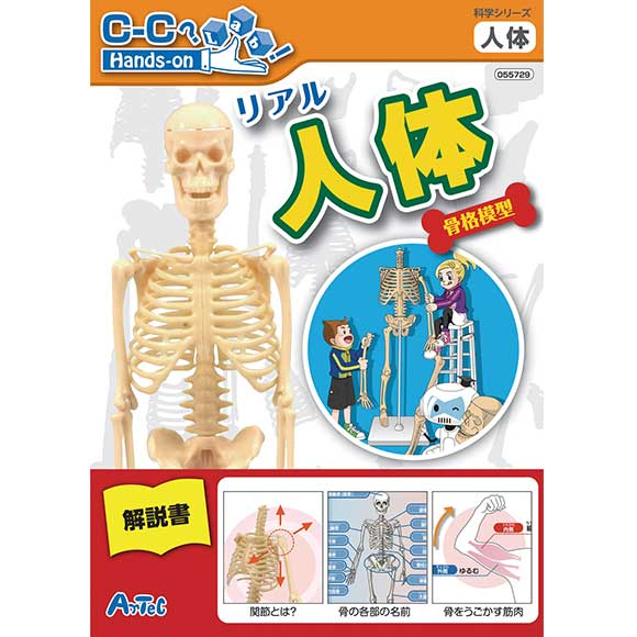 miscellaneous goods and peripheral equipment errand shop | rakuten, Skeleton