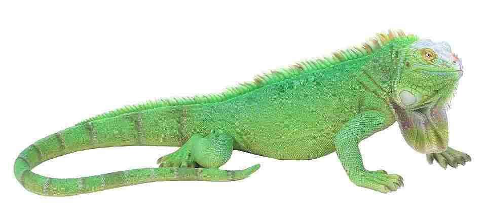 イグアナ グリーン 大 50cm×48cm×高さ20cm 重量:2.5kg 素材ポリレジン