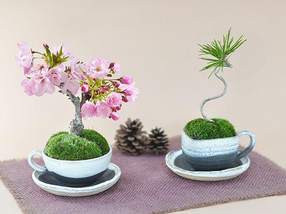 桜盆栽 ミニミニ桜と松のペアセット 桜 かわいい おしゃれ 初心者 贈り物 ギフト プレゼント 誕生日 バレンタイン さくら ペアセット カップル セット bonsai 桜特集