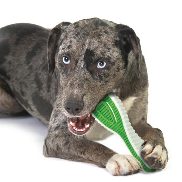 遊びながらデンタルケア Petstages ペットステージ デンタル フィニティ ラージ【犬/おもちゃ/噛む/歯みがき】