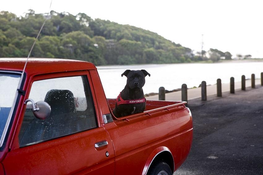 エントリーでポイントアップ[2ステップで装着可能なハーネス] EZY DOG イージードッグ クイックハーネス XSサイズ ピンクカモ 新色【犬/ハーネス/胴輪/小型犬】
