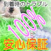 【お買い得セット】 グリーンネオンテトラ6匹とフネアマ貝3匹のセット