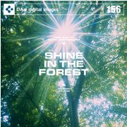 【特価】DAJ 156 SHINE IN THE FOREST【メール便可】
