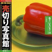 売切り写真館 JFI 022 色々(いろいろ) Colours【メール便可】