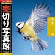 売切り写真館 JFI 029 鳥たち Birds【メール便可】