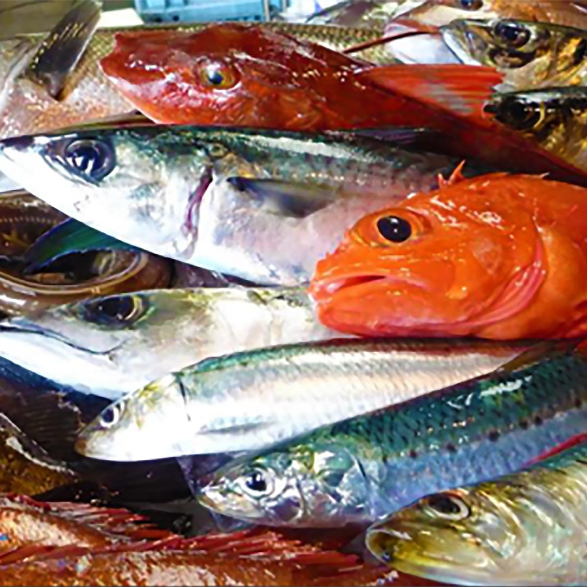 【ふるさと納税】石巻港直送 逸品鮮魚
