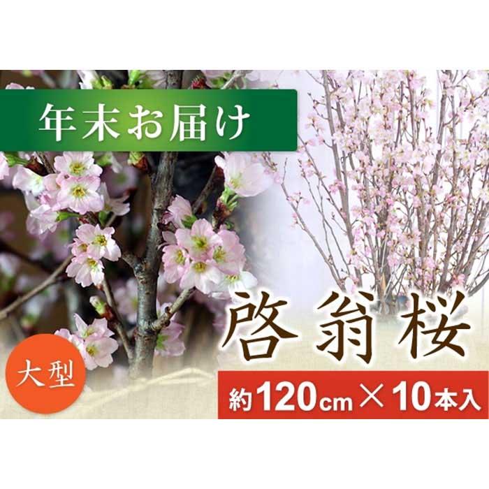 【ふるさと納税】春を先取り!冬に咲く桜『啓翁桜』 (年末お届けLサイズ) F2Y-1692
