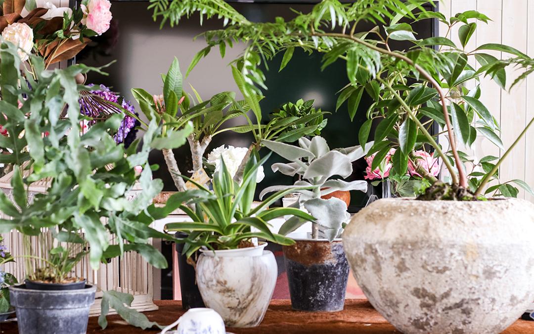 【ふるさと納税】≪年4回定期便≫植物と季節を感じる1年間「インドアグリーンスタイル」 観葉植物 観葉植物 お申込み日の翌月から3ヶ月ごと4回お届け, 谷汲村:4a8c2420 --- vidaperpetua.com.br