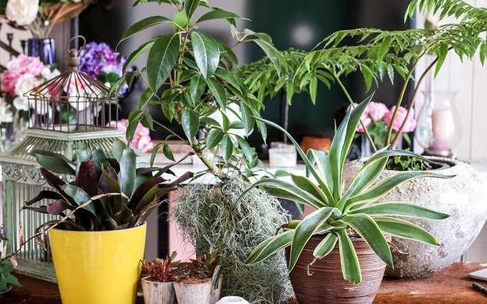 【ふるさと納税】≪年12回定期便≫ 植物と過ごす1年間「グリーンライフ12」 観葉植物 お申込み日の翌月から毎月12回お届け