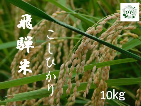 飛騨のこだわりコシヒカリ ふるさと納税 飛騨の米 コシヒカリ 10kg 地場産市場ひだ こだわり農家 Q401 令和2年産 売買 価格