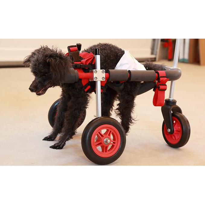 完売 【ふるさと納税】小型犬用三輪車椅子(背丈23~35cm 体重8キロ以下) 【雑貨・日用品】, シンジョウソン:2adde577 --- easassoinfo.bsagroup.fr