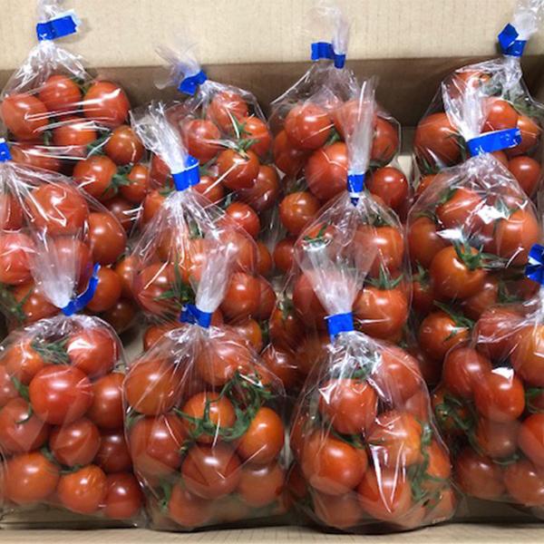 【ふるさと納税】a10-510 増田トマト農園のミニトマト 約2.6kg