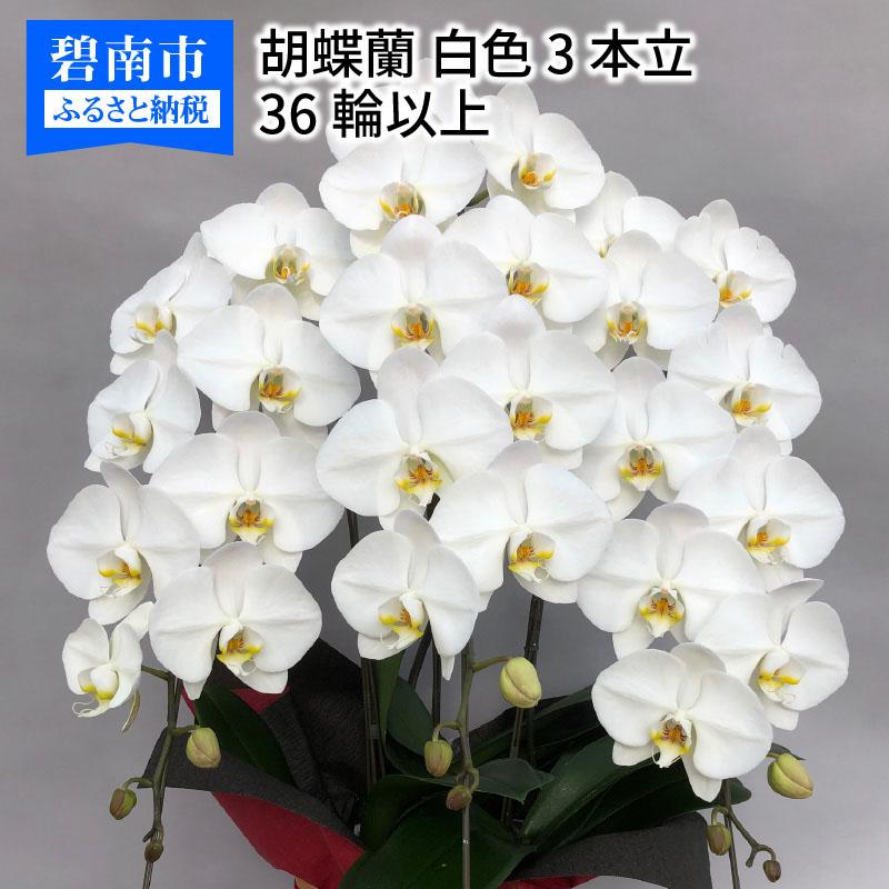 【ふるさと納税】胡蝶蘭 白 3本立 36輪以上 H042-005