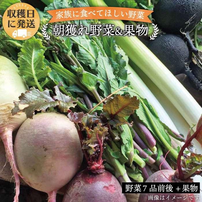【ふるさと納税】朝獲れ!野菜7品(前後)セット+果物 オーガニックナガミツファーム AGE004