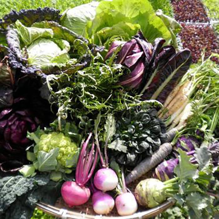 【ふるさと納税】【6品 / 48回定期便】あいちゃん農園の「イタリア野菜」セット(ショート) [FAA016]