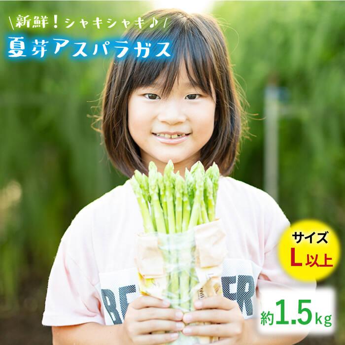 【ふるさと納税】「先行予約」【とれたて新鮮♪】夏芽アスパラガス1.5kg(Lサイズ以上) BBW002