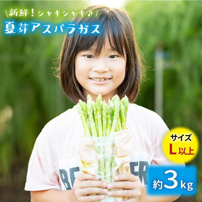 【ふるさと納税】「先行予約」【とれたて新鮮♪】夏芽アスパラガス 3.0kg(Lサイズ以上) BBW004