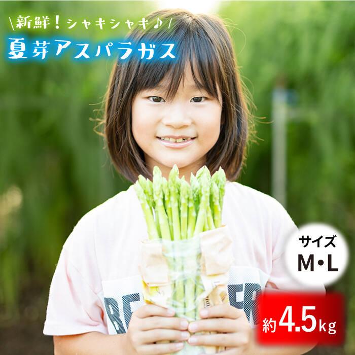 【ふるさと納税】「先行予約」【とれたて新鮮♪】夏芽アスパラガス4.5kg(MLサイズ) BBW005
