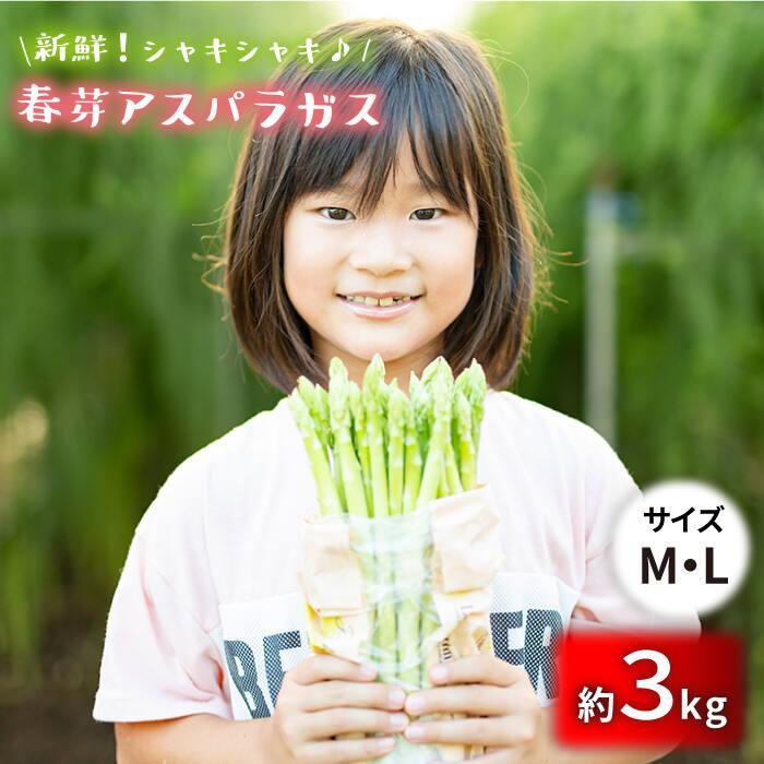 【ふるさと納税】アスパラガス (春芽)3kg/MLサイズ [BBW012]