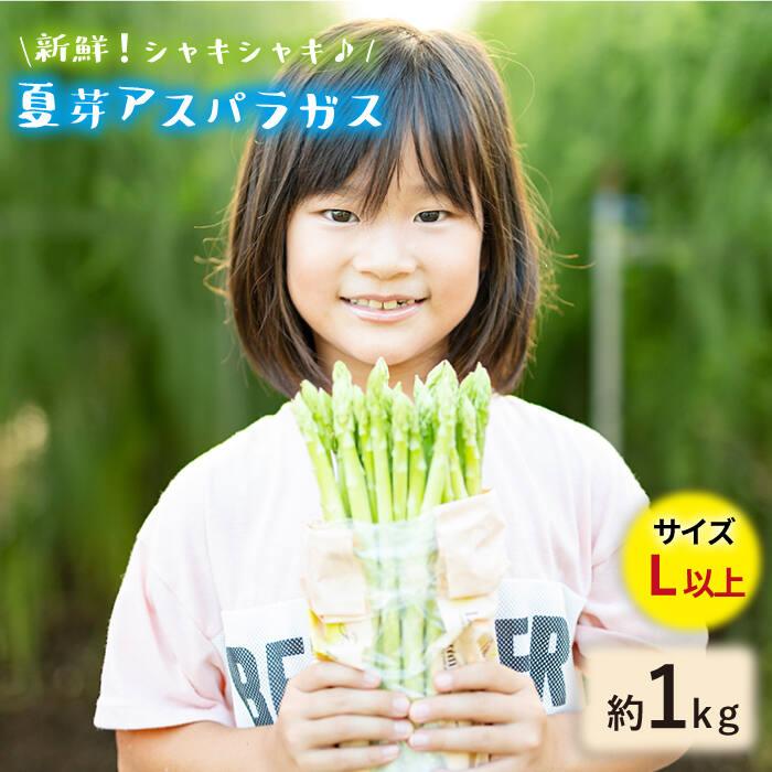 【ふるさと納税】「先行予約」【とれたて新鮮♪】夏芽アスパラガス1kg(Lサイズ以上) [BBW018]
