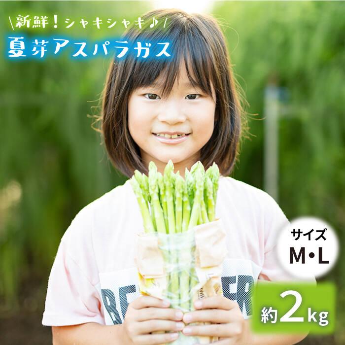 【ふるさと納税】「先行予約」【とれたて新鮮♪】夏芽アスパラガス2kg(MLサイズ混合) [BBW019]