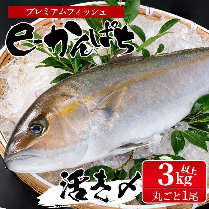 AEL 養殖エコラベル 認証を初めて取得したカンパチです ふるさと納税 期間限定の激安セール 串間市 アウトレットセール 特集 特産品 東京オリンピック供給資格 認証取得のカンパチ 丸ごと1尾 丸栄水産 ラウンド AG-CD1 e-かんぱち 3.0kg~3.8kg 活き〆プレミアムフィッシュ