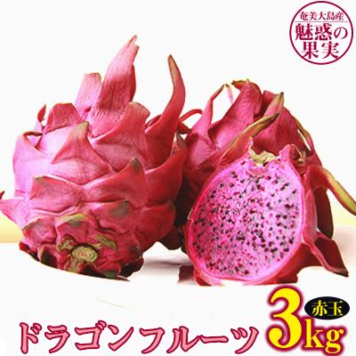 ふるさと納税 奄美大島産 売却 100%品質保証 ドラゴンフルーツ 赤玉 3.0kg 奄美大島産ドラゴンフルーツ 魅惑の果実
