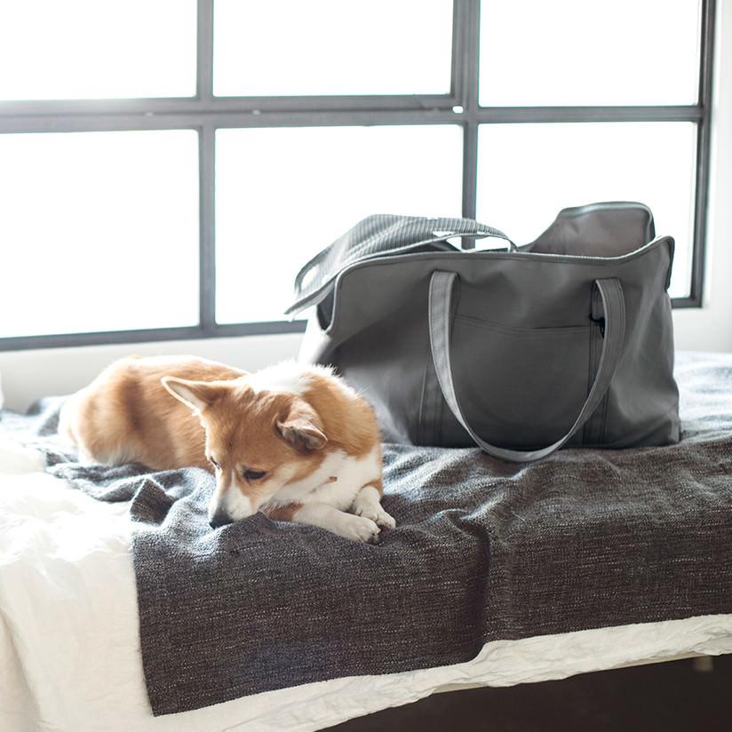 スクエア トート キャンバス ソリッド L サイズ 犬