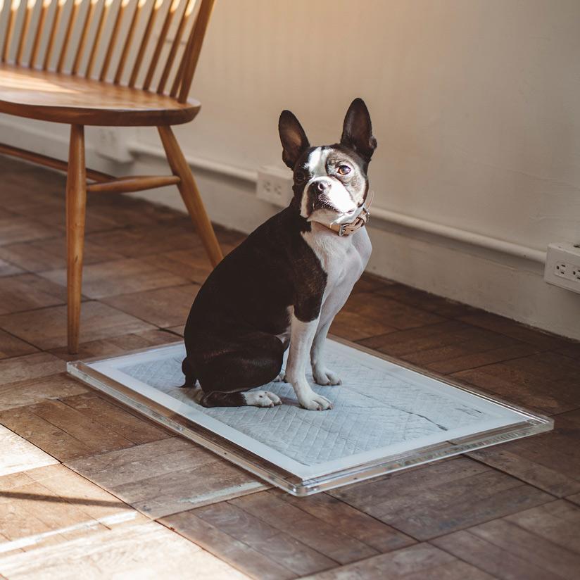 オリジナル アクリル トイレ トレイ M ワイド 犬トイレ おしゃれ 犬 ドッグ トイレトレイ シンプル アクリル 日本 ケージ ゲージ 子犬 パピー 小型犬 中型犬