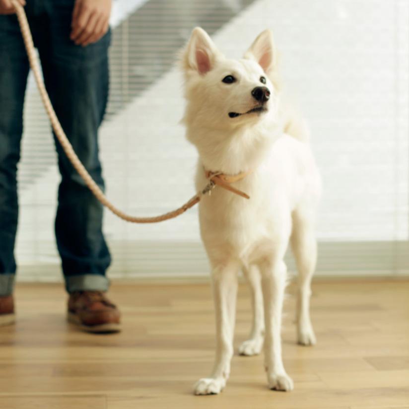 【犬 リード】オリジナル ヌメ ウーブン リング リード L サイズ小型犬用リード 中型犬用リード 大型犬用リード ペット用品 ファッションリード カジュアル スタンダードリード
