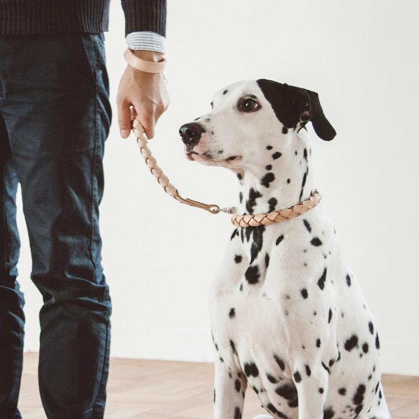 【犬 首輪】オリジナル ヌメ ウーブン カラー 3L サイズ 大型犬犬首輪 犬の首輪 革 犬 首輪 大型犬 革 いぬ くびわ