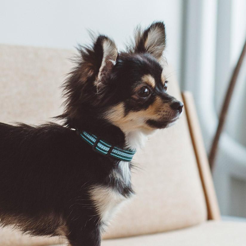 犬 首輪 見ているだけでも元気になっちゃう 柔らかさが人気のカラー首輪 小型犬 ペット 明るい 犬用 テープ 水 アウトドア カラー SS かわいい 犬の首輪 爆売り シンプル おしゃれ ストライプ 中型犬 サイズ犬 フレッシュ 開催中