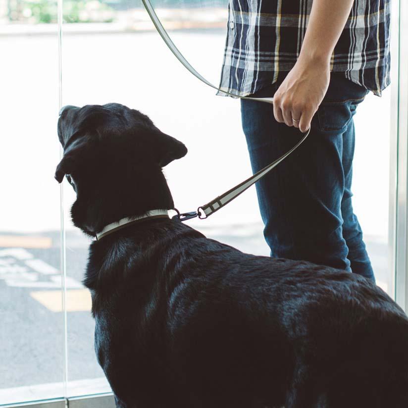 【犬 リード】リフレクティブ リード L サイズ 大型犬リード 首輪 犬 ワンちゃんの光るリード きらきらリード リード 夜間 散歩 ドッグラン 事故防止 中型犬 大型犬