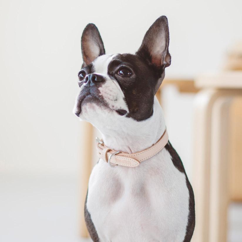犬 本日限定 首輪 革 人気のヌメ革を2枚仕立てで作り上げた逸品 思い出と共にあめ色に変化していく様子をお楽しみください オリジナル ヌメ カラー L犬 おしゃれ かわいい 小型犬 犬首輪 犬の首輪 いぬ キャバリア 散歩 柴犬 ボストン レザー 日本製 ペット 完全送料無料 くびわ ドゥードル シンプル フレブル コーギー 人気 皮
