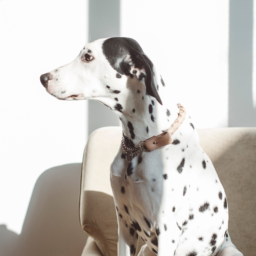 【革 首輪】オリジナル ヌメ ウーブン ハーフチョーク LL サイズ犬 首輪 犬首輪 大型犬 中型犬用 シンプルベーシック革首輪