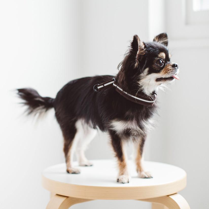 犬 ハーフチョーク 首辺りとても優しいリフレクションのハーフチョークフリーステッチ おしゃれ 日本製 ペット シンプル 反射 夜 散歩 リフレクティブ チワワ トイプードル ダックス ハーフチョークカラー チョーク 愛犬 評判 犬の首輪 20 犬用首輪 小型犬ハーフチョーク ブランド買うならブランドオフ 小型犬