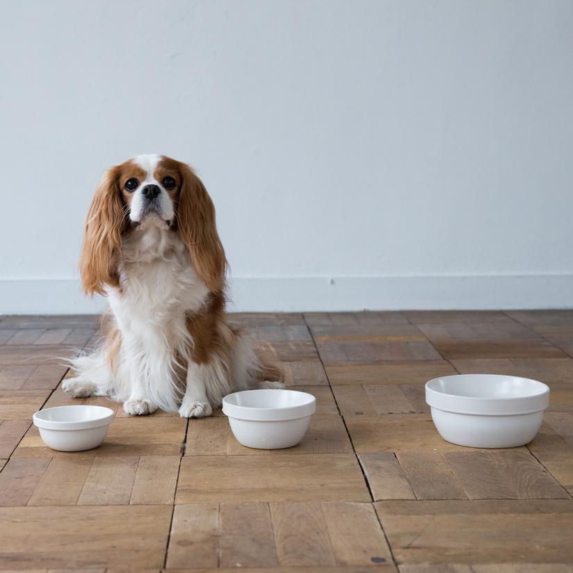 MESHIDAI GOHAN BOWL S REPLUS メシダイリプラス メシダイ ゴハン 犬 ドッグ フードボウル foodbowl dog