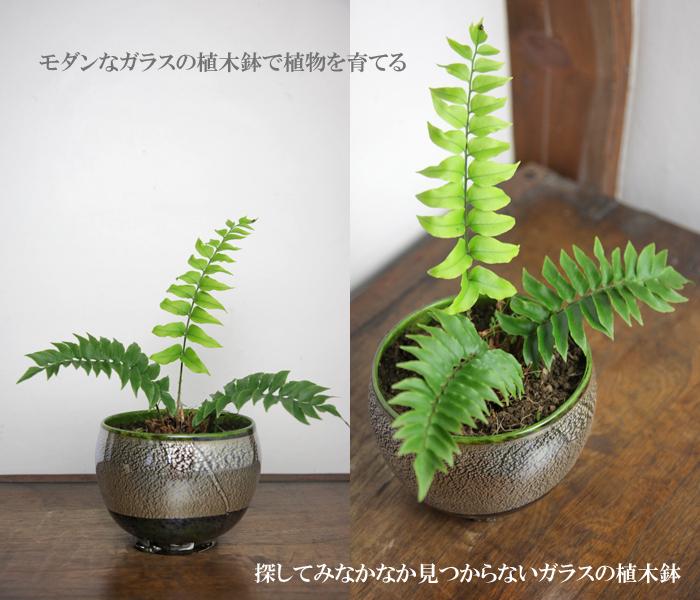 植木鉢 銀彩ラスター丸鉢(特大)植木鉢・盆栽鉢・ガラス製の花器・花瓶・フラワーベースの通販・販売
