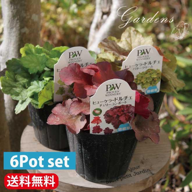 寄せ植えや花壇のアクセントに ヒューケラ 苗 6Pセット 3号ポット 寄せ植え カラーリーフ 送料無料 3寸 限定Special Price 豊富な品