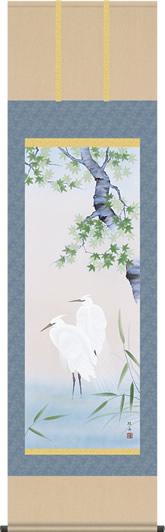 掛け軸-「夏」楓に白鷺/長江桂舟(尺五 桐箱 緞子)花鳥画掛軸 [送料無料]