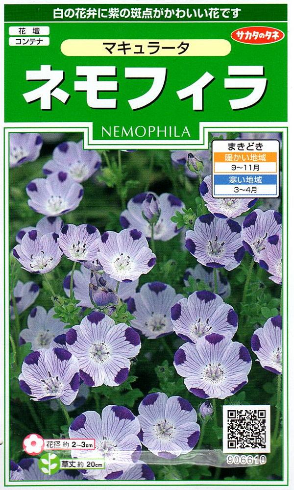白の花弁に紫の斑点がかわいい花です 種子 激安通販専門店 限定価格セール ネモフィラ マキュラータ サカタのタネ