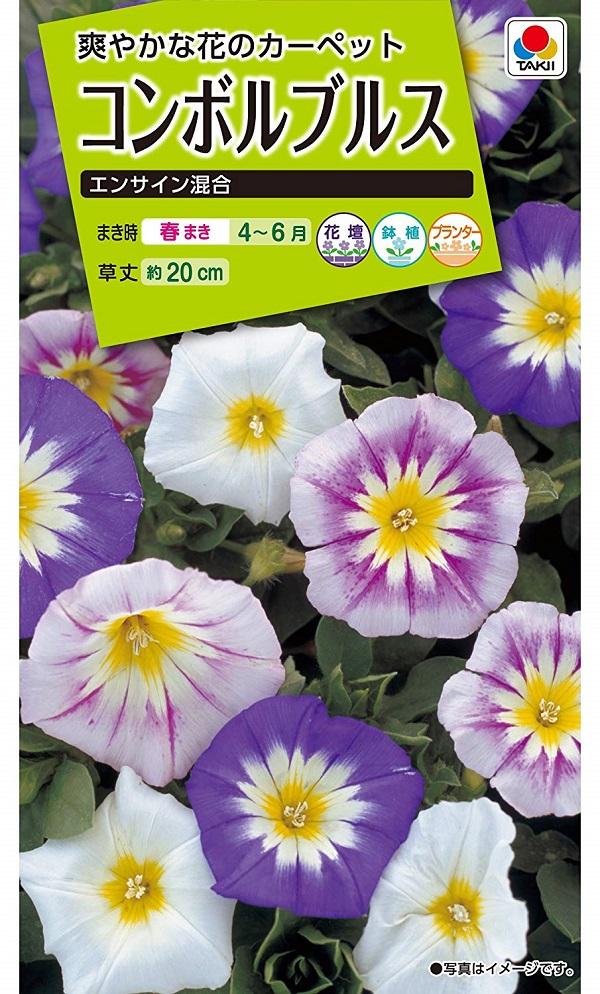 【種子】<BR>コンボルブルス エンサイン混合タキイ種苗のタネ